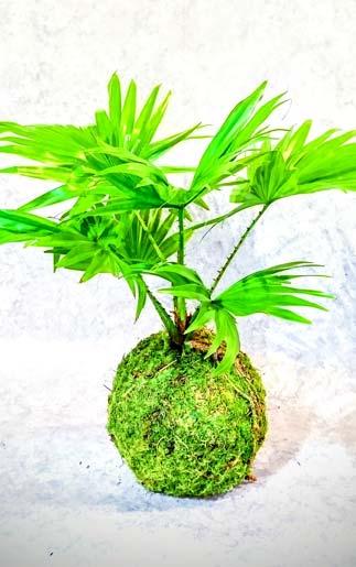 Collection plantes d'intérieur