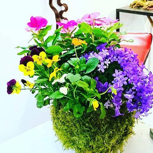 kokedama fleur pour particuliers