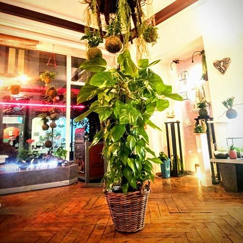 plantes pour évènements particuliers