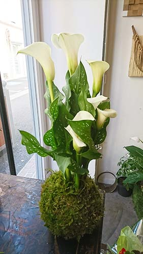 Fleurs pour professionels