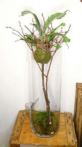 Structure végétale pour professionels