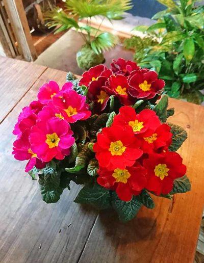 kokedama bouquet